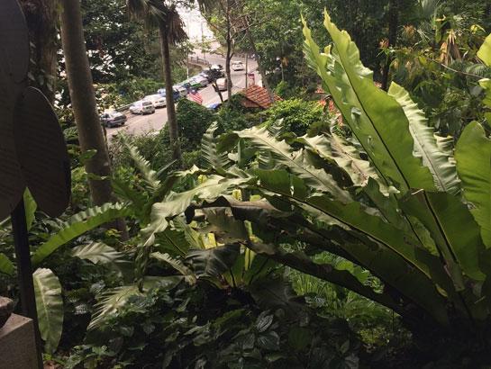 saraherhodes-spice-garden